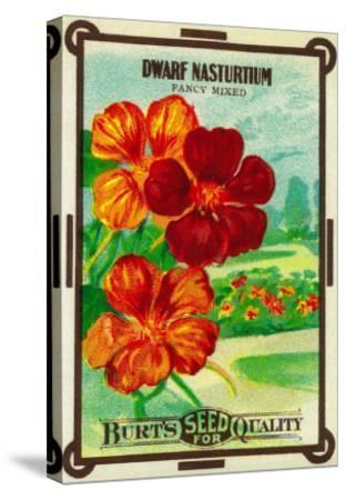 Dwarf Nasturtium Seed Packet-Lantern Press-Stretched Canvas Print