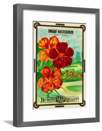 Dwarf Nasturtium Seed Packet-Lantern Press-Framed Art Print
