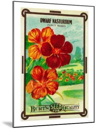 Dwarf Nasturtium Seed Packet-Lantern Press-Mounted Art Print