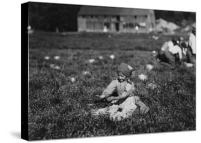 Young Girl Picking Cranberries Photograph - Eldridge Bog, MA-Lantern Press-Stretched Canvas Print