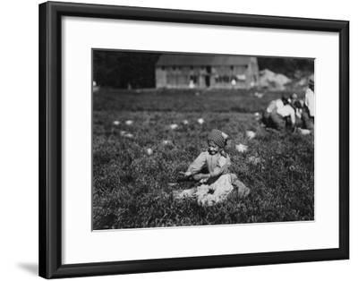 Young Girl Picking Cranberries Photograph - Eldridge Bog, MA-Lantern Press-Framed Art Print