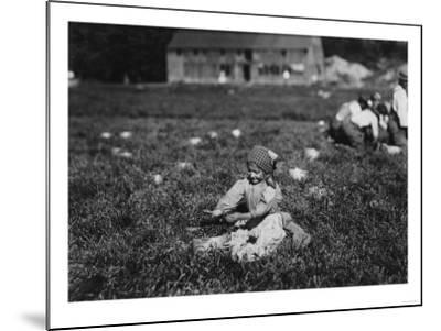 Young Girl Picking Cranberries Photograph - Eldridge Bog, MA-Lantern Press-Mounted Art Print