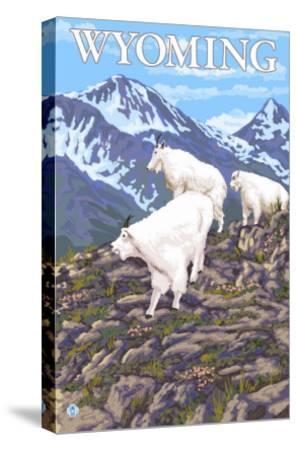White Mountain Goat Family - Wyoming-Lantern Press-Stretched Canvas Print