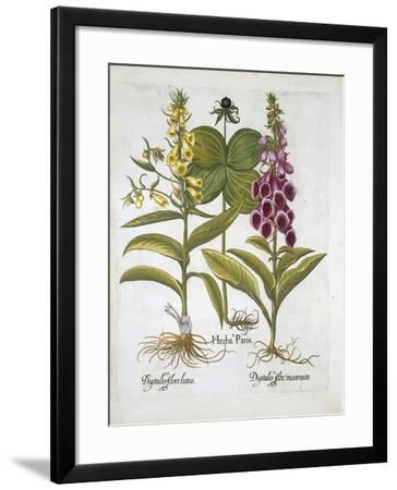 Herb Paris--Framed Giclee Print
