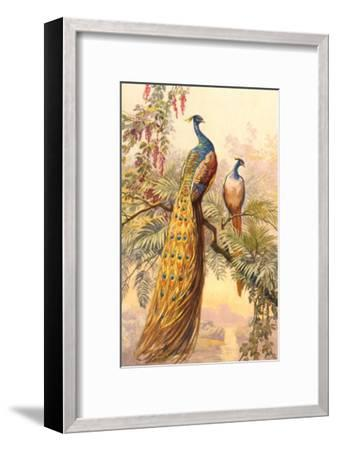 Peacock and Peahen, Illustration--Framed Art Print