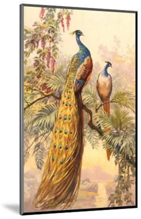 Peacock and Peahen, Illustration--Mounted Art Print