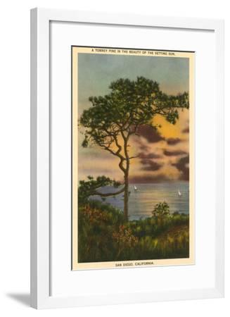 A Torrey Pine, San Diego, California--Framed Art Print