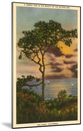 A Torrey Pine, San Diego, California--Mounted Art Print