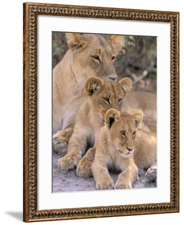 Lioness and Cubs, Okavango Delta, Botswana-Pete Oxford-Framed Photographic Print