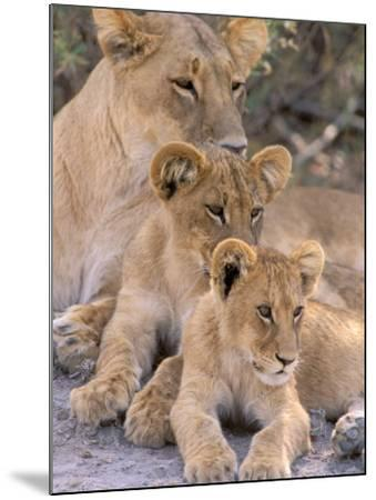 Lioness and Cubs, Okavango Delta, Botswana-Pete Oxford-Mounted Photographic Print