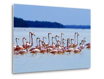 Flamingos at Laguna Oviedo, Dominican Republic, Caribbean-Greg Johnston-Metal Print