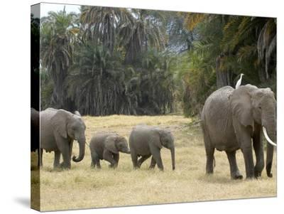 Born Free Charity, Kenya, September 2004--Stretched Canvas Print