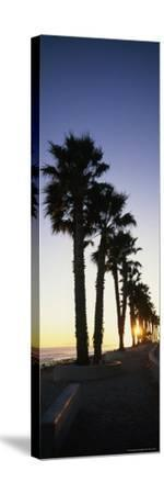 Silhouetted Palm Trees Along Surfers Point at Seaside Park-Rich Reid-Stretched Canvas Print