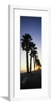 Silhouetted Palm Trees Along Surfers Point at Seaside Park-Rich Reid-Framed Photographic Print