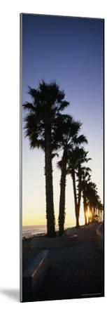Silhouetted Palm Trees Along Surfers Point at Seaside Park-Rich Reid-Mounted Photographic Print