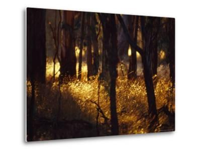 Sunset Falls Over Seeding Grasses and Tree Trunks in Late Summer-Jason Edwards-Metal Print