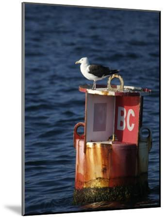 Great Black-Backed Gull on a Navigational Bouy in Gloucester Harbor-Tim Laman-Mounted Photographic Print