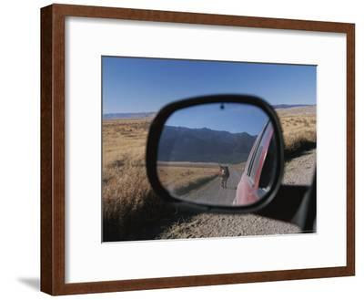 Cattle on a Dirt Road are Reflected in the Rear View Mirror of a Car-Raymond Gehman-Framed Photographic Print