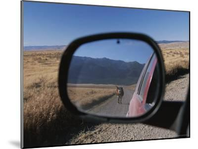 Cattle on a Dirt Road are Reflected in the Rear View Mirror of a Car-Raymond Gehman-Mounted Photographic Print