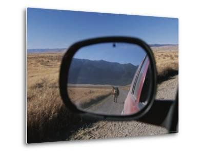 Cattle on a Dirt Road are Reflected in the Rear View Mirror of a Car-Raymond Gehman-Metal Print