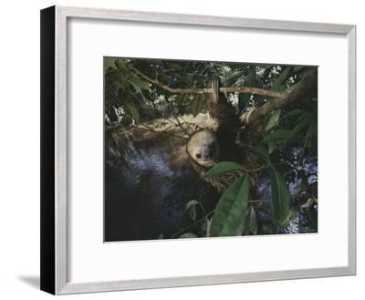 Sloth-Mattias Klum-Framed Photographic Print