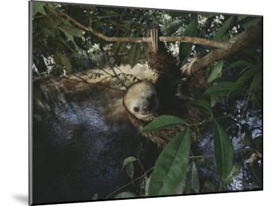 Sloth-Mattias Klum-Mounted Photographic Print