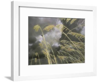 Sea Oats Grow Along a Dune on a South Carolina Barrier Island-Annie Griffiths Belt-Framed Photographic Print