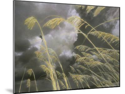 Sea Oats Grow Along a Dune on a South Carolina Barrier Island-Annie Griffiths Belt-Mounted Photographic Print