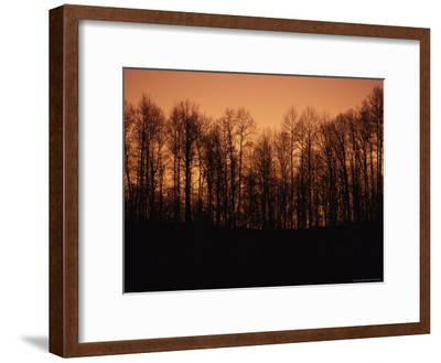 Hardwood Trees Make a Silhouette at Sunset-Stephen Alvarez-Framed Photographic Print