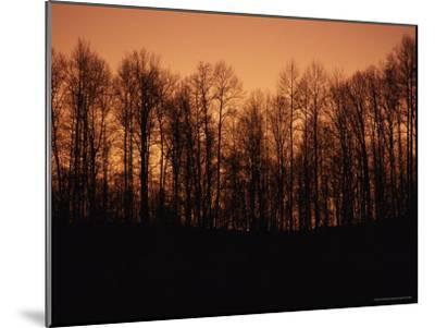 Hardwood Trees Make a Silhouette at Sunset-Stephen Alvarez-Mounted Photographic Print