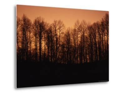 Hardwood Trees Make a Silhouette at Sunset-Stephen Alvarez-Metal Print