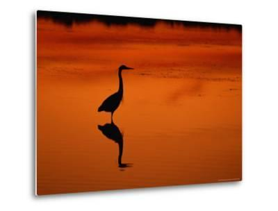 Silhouette of a Great Blue Heron Standing in the Water at Twilight-Norbert Rosing-Metal Print