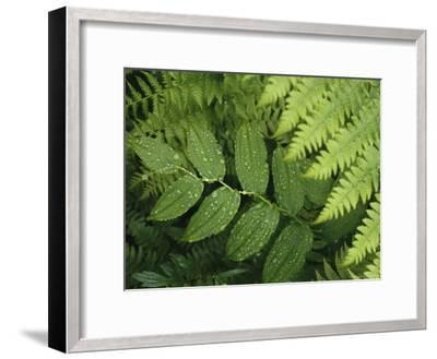 Close Up Detail of a Fern Frond and Vining Plant-Melissa Farlow-Framed Premium Photographic Print