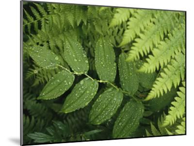 Close Up Detail of a Fern Frond and Vining Plant-Melissa Farlow-Mounted Premium Photographic Print