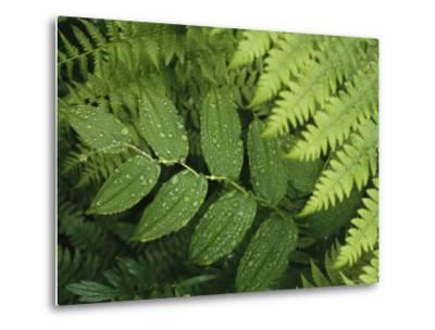 Close Up Detail of a Fern Frond and Vining Plant-Melissa Farlow-Metal Print