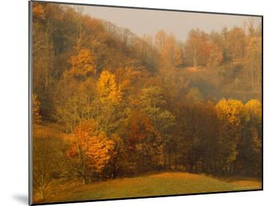 Morning View of Autumn Colors in the Jefferson National Forest-Raymond Gehman-Mounted Photographic Print