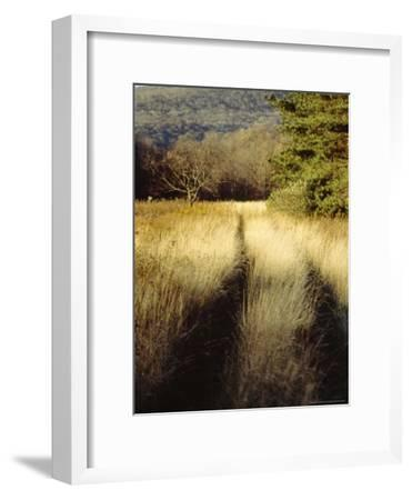 Meadow Grass in the Cranberry Glades Botanical Area in Autumn-Raymond Gehman-Framed Photographic Print