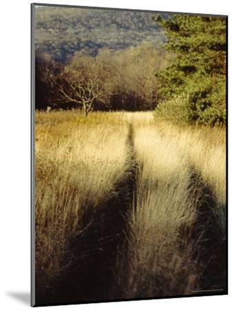 Meadow Grass in the Cranberry Glades Botanical Area in Autumn-Raymond Gehman-Mounted Photographic Print