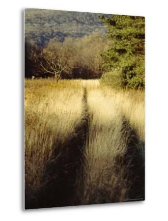Meadow Grass in the Cranberry Glades Botanical Area in Autumn-Raymond Gehman-Metal Print