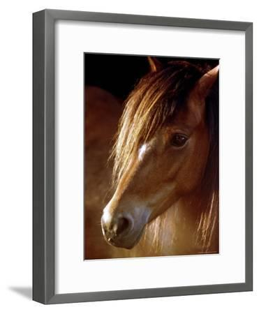 Sunlight Shines on the Forelock of a Horse-Rex Stucky-Framed Photographic Print