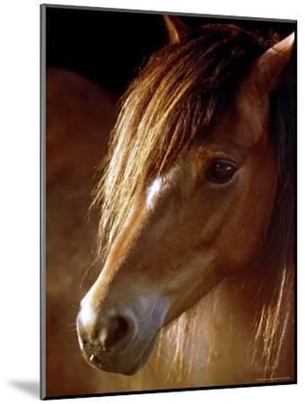 Sunlight Shines on the Forelock of a Horse-Rex Stucky-Mounted Photographic Print