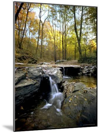 Woodland View at Long Branch Nature Center-Rex Stucky-Mounted Photographic Print