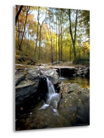 Woodland View at Long Branch Nature Center-Rex Stucky-Metal Print