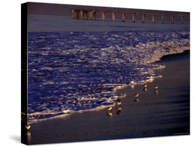 Surf Chasing Birds on Beach at Hermosa Beach-Christina Lease-Stretched Canvas Print