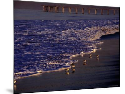 Surf Chasing Birds on Beach at Hermosa Beach-Christina Lease-Mounted Photographic Print