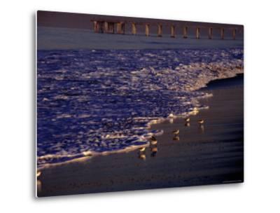 Surf Chasing Birds on Beach at Hermosa Beach-Christina Lease-Metal Print