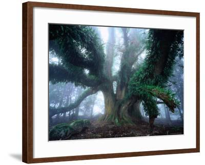 Giant Myrtle-Rob Blakers-Framed Photographic Print