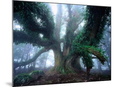 Giant Myrtle-Rob Blakers-Mounted Photographic Print