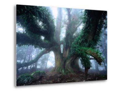 Giant Myrtle-Rob Blakers-Metal Print