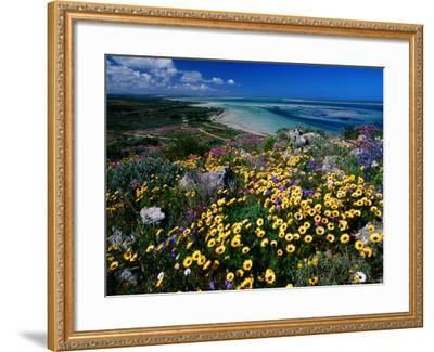 Overhead of Beach and Wildflowers-Frans Lemmens-Framed Photographic Print